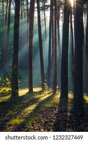 The sun is shining into forest in the harz Mountains
