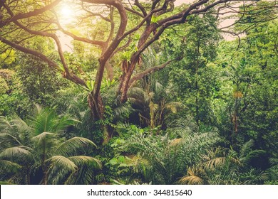 Sun shining into tropical green jungle