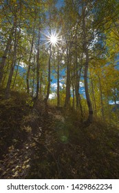 The sun shining light through the trees