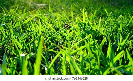 Sun shining on blades of grass.