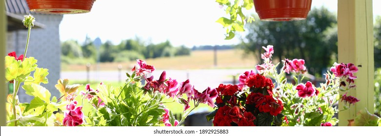Sun shining on growing flowers standing and hanging in pots on balcony of home in countryside