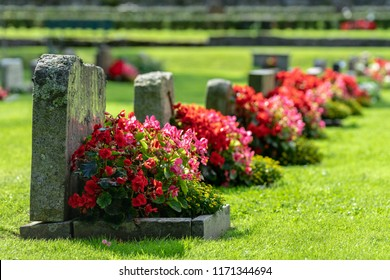 Sun shining on a row of gravestones with red and pink flowers on a beautiful and well cared cemetery