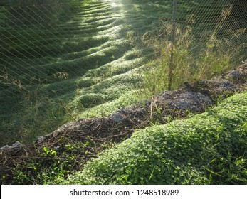 Sun shining on weeds in olive grove in Andalusia, Spain