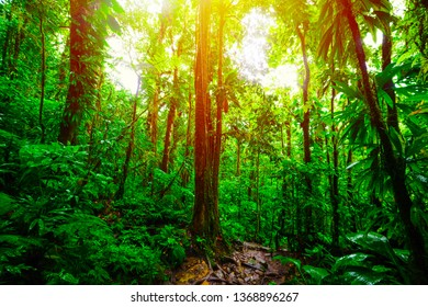 Sun shining over green trees in Basse Terre jungle. Guadeloupe, Caribbean