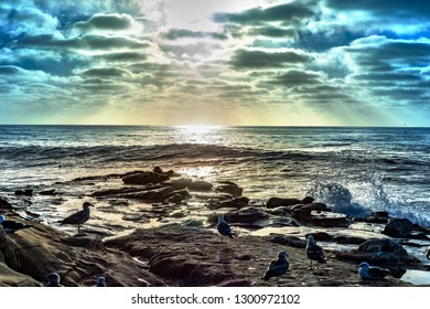 The sun shining over the pacific ocean on shores of San Diego, California; wild animals, sea fowl and sea lions, resting and sunbathing on the rocks as the sun begins to disappear behind clouds.