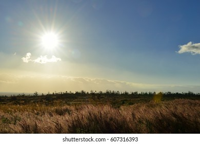 sun shining over the tall grass field in Volcano National Park at sunset, Big Island of Hawaii, USA