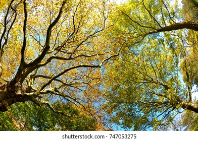 Sun shining in the sky among treetops in an autumn forest