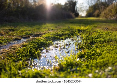Sun shining and sparkling on puddle of mud and green meadow during autumn.