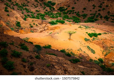 Sun shining a spotlight over resilient tree growing in a little sand dune in a shadowy ravine on a sahelian plateau with refresehd vegetation during summer rainy season outside Niamey capital of Niger