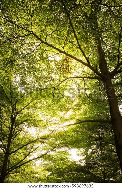 Sun shining though green tree branches.