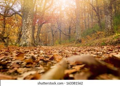 Sun shining through an autumn forest.
