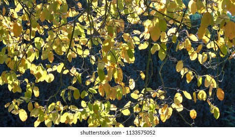 sun shining through autumn leafs