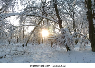 Sun shining through the branches of a snowy winter forest