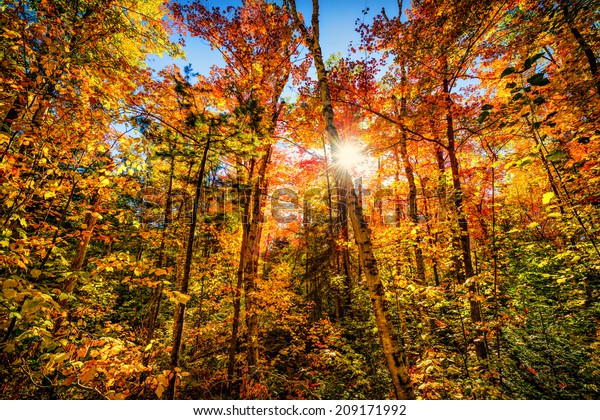 Sun shining through colorful autumn leaves making them glow in a forest.