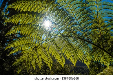 Sun shining through fern leaves