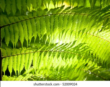 Sun shining through fern leaves in a rainforest in New Zealand