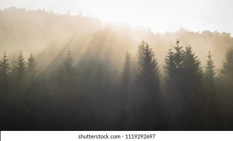 The sun is shining through a foggy forest in the Alps