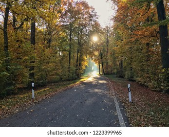 Sun shining through forest on an early autumn morning. Road covered with fallen leaves. Trees in Switzerland, Europe.