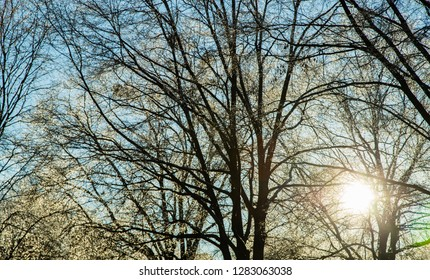 Sun shining through icy tree limbs in winter