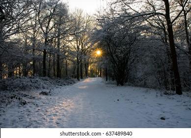 Sun shining through leafless tress winter snow sunrise