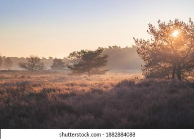Sun shining through the morning mist in National Park Loonse en Drunense Duinen