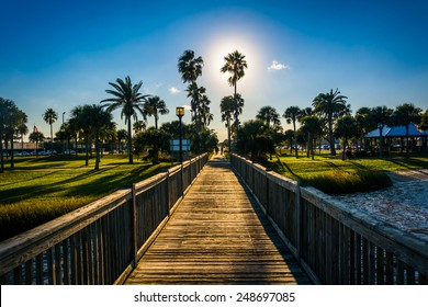 The sun shining through palm trees and a fishing pier in Daytona  Beach, Florida.