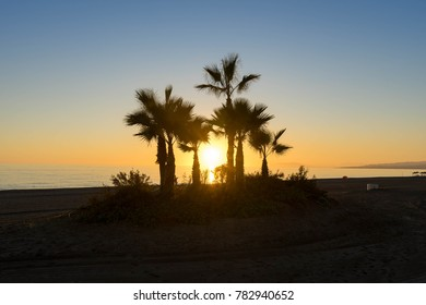 Sun shining through palm trees at sunset at the beach.
