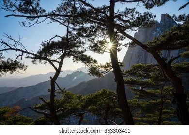 Sun shining through pine trees in Bukhansan National Park, Seoul, South Korea