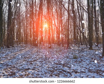 Sun is shining through tree trunks. First snow in forest.