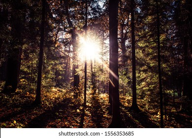 Sun shining through trees in autumn