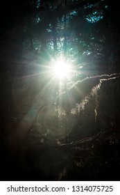 Sun shining through trees in a deep mossy forest in Southeast Alaska.