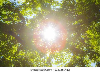 Sun shining through the trees in a dreamy blur.