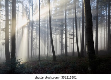 Sun shining through the trees of the fog of a forest in rays