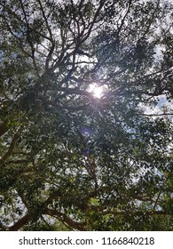 Sun, shining through the trees, making it's way to the ground through nature as part of nature, the beautiful skies hidden by the trees in the way, also beautiful and gleaming with pride under the sun