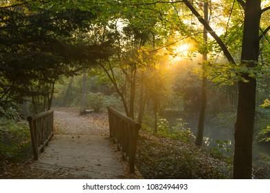 Sun shining through the trees in a park during an autumn sunrise.