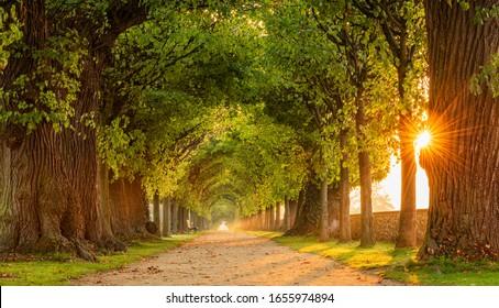 Die Sonne scheint durch die Tunnelavenue der Linden Bäume, Baumgeheitweg durch den Park bei Sonnenaufgang