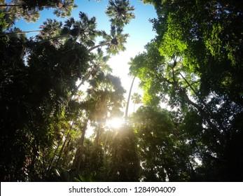 Sun shining through void of tree in wild rain forest.