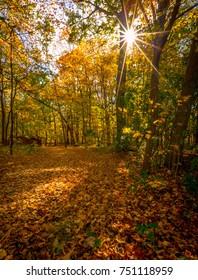 Sun shining thru autumn foliage