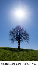 The sun shining and tree on a green meadow a vibrant rural landscape with blue sky.