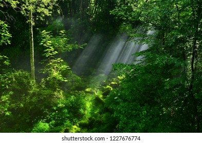 Sun shinning through trees in a green forest. Sunrays in centre.