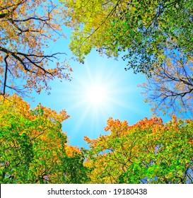 sun sjines through trees