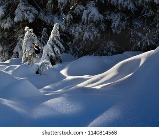 Sun star as sun shines through trees at the peak of a snowy mountain in Canada
