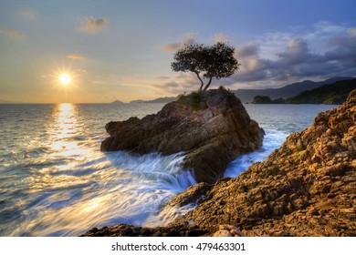 sun and trees on a rock on the high seas,,locations teluk kiluan Lampung Indonesia