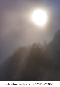 Sun and trees through very dense fog. The sun's rays pass through dense fog.