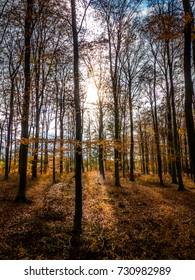 Sun true the trees