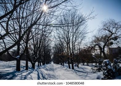 Sun in winter park, winter snowy scenery