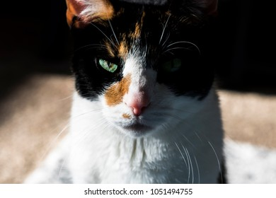 Sunbathing Calico Cat