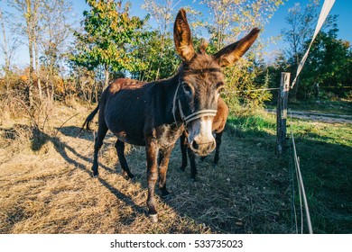 Sunbathing donkey in pasture