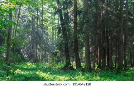 Sunbeam entering rich deciduous riparian stand in midday, just rain after, Bialowieza Forest, Poland, Europe
