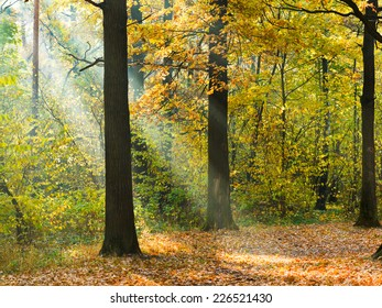 sunbeam lit lawn in autumn forest in sunny day
